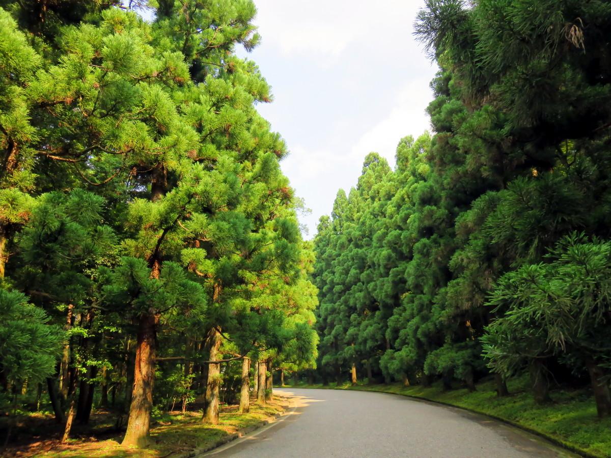 [EN] Trees at Musashi Imperial Graveyard. [FR] Arbres au cimetière impérial Musashi. [JP] 武蔵陵墓地で木。