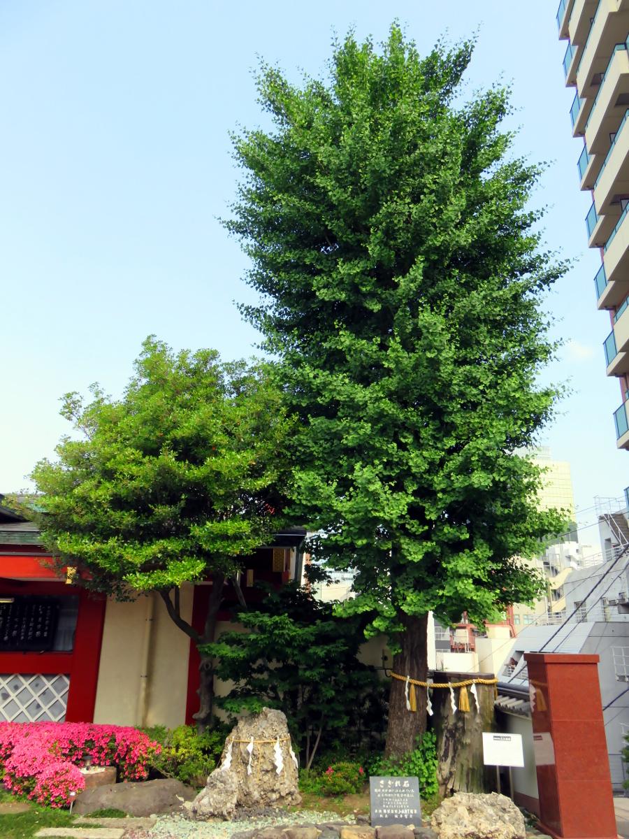 [EN] Trees. [FR] Arbres. [JP] 御神木。